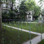 La vigna di Leonardo vive di nuovo nel cuore storico di Milano